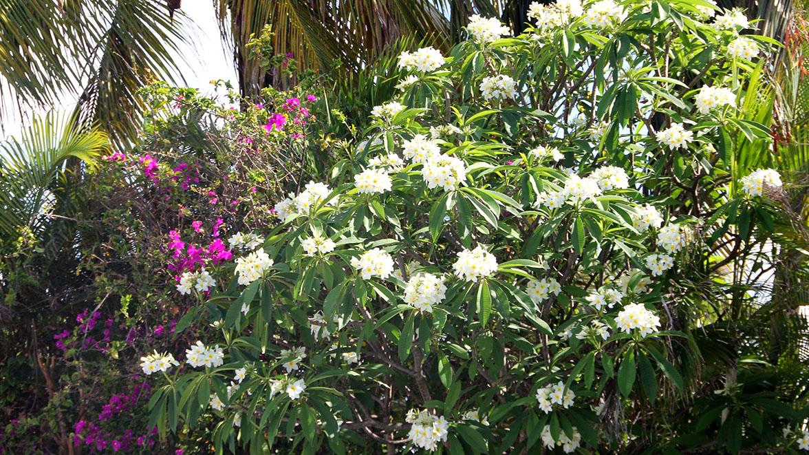Tiaré - Villa Caraïbes - Location de villas et maisons en Guadeloupe - www.villacaraibes.fr